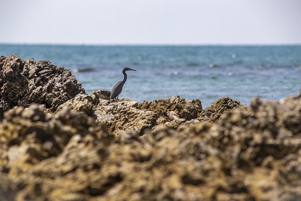 Thailand, Passerine Bird, Environment, Asia, One Animal