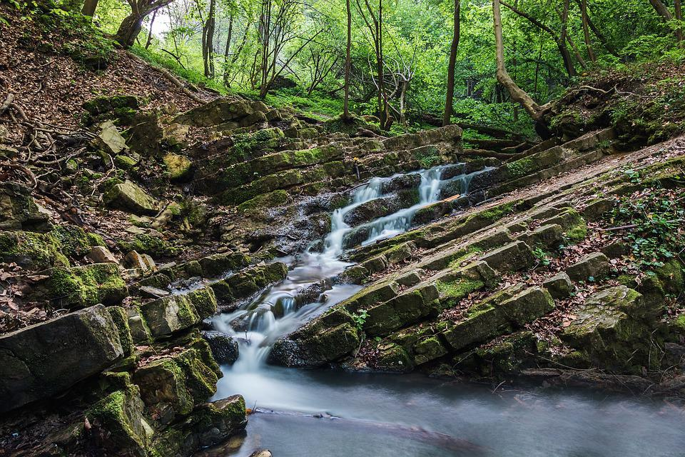 Forest, Waterfall, River, Creek, Environment, Fall