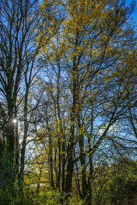 Forest, Wood, Nature, Autumn, Light, Environment