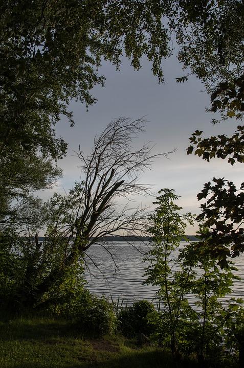 Tree, Nature, Wood, Landscape, Leaf, Environment