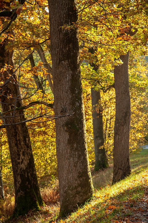 Tree, Forest, Environmental, Autumn, Green, Leaf