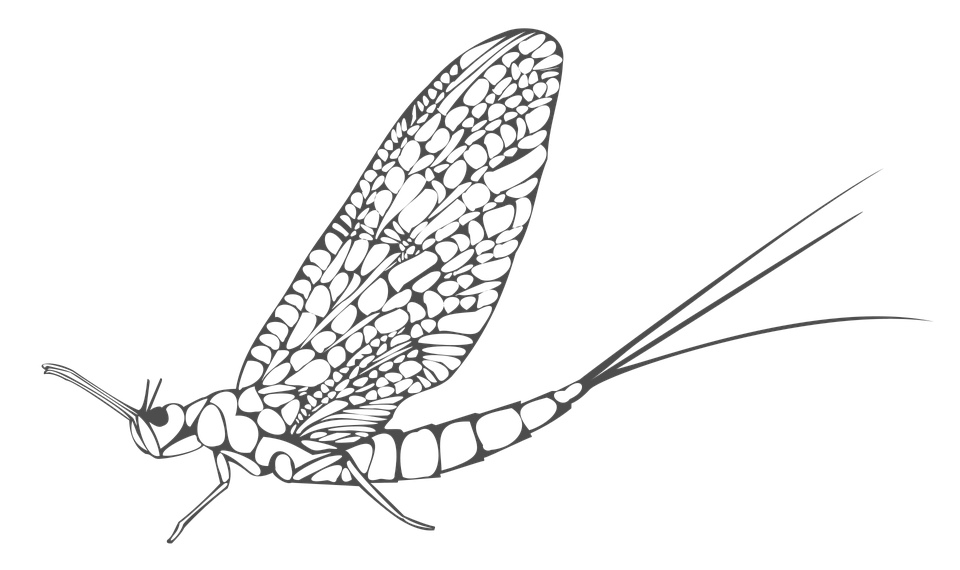 Ephemera, Insect, Blades
