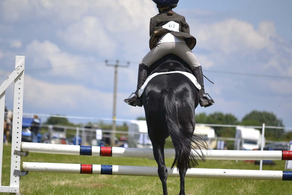 free photo equestrian action motion jump horse riding horse max pixel