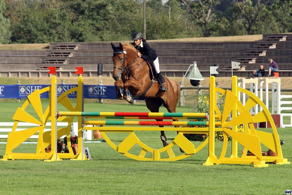 Contest, Equestrian, Horse