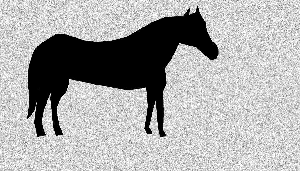 Horse, Equine, Equestrian, Animal