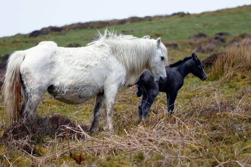 Horses, Animal, Field, Equestrian, White, Grass, Mare