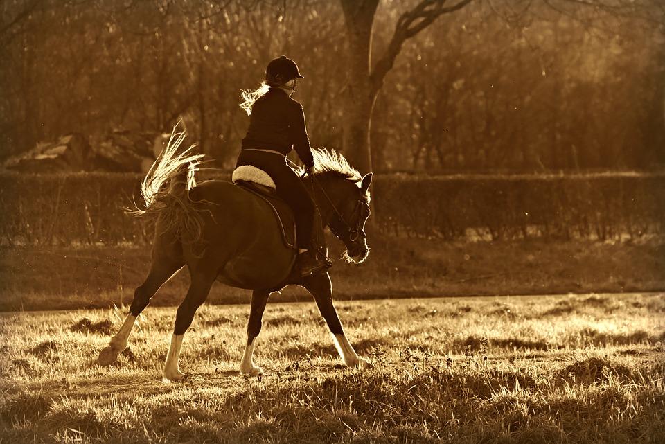 Horse, Riding, Rider, Equestrian, Horseback, Animal
