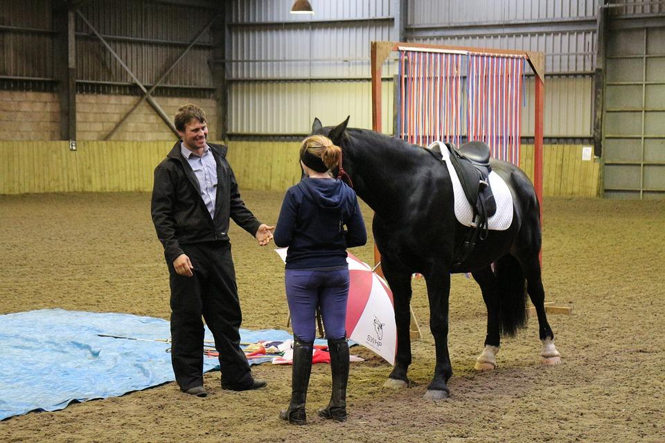 Equine, Horsemanship, Horse, Equestrian, Nature
