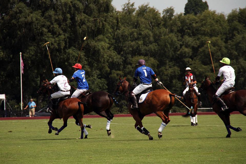 Polo, Horses, Competition, England, Equestrian, Summer