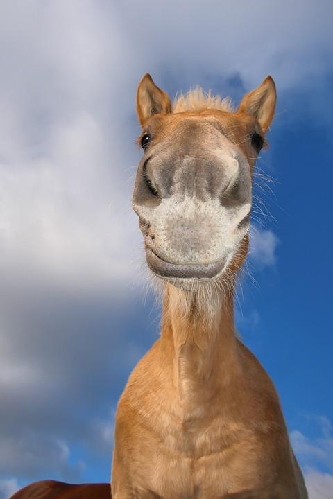 Horse, Animal, Equines, Head, Portrait, Equestrian, Sky