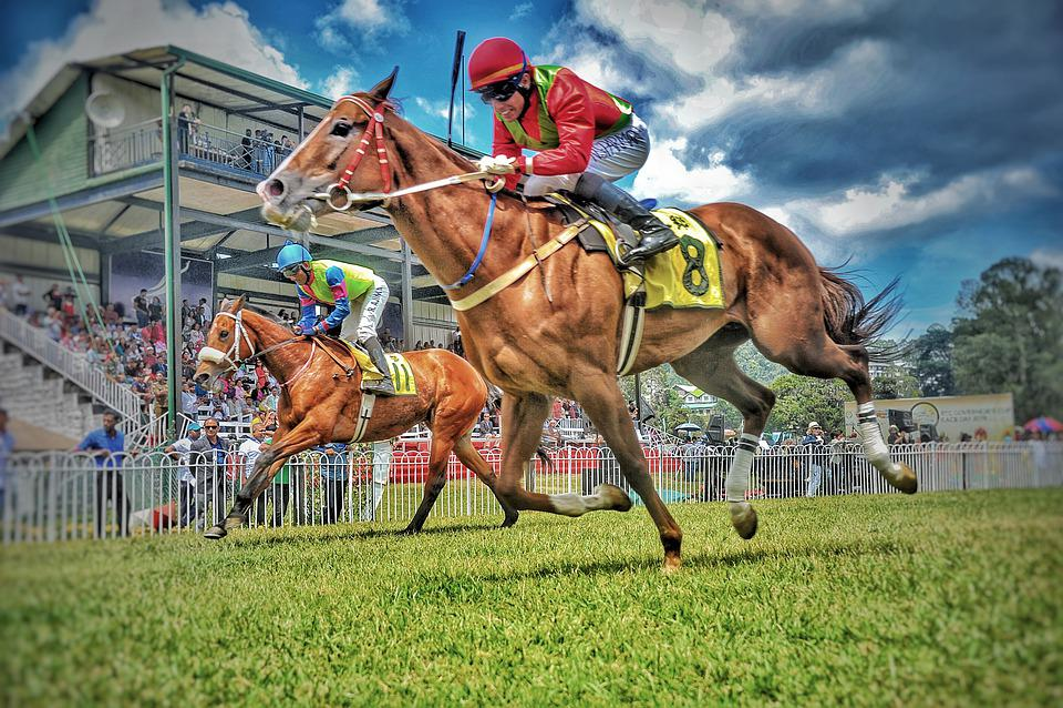 Race, Equestrian, Sport, Horse, Animal, Equine