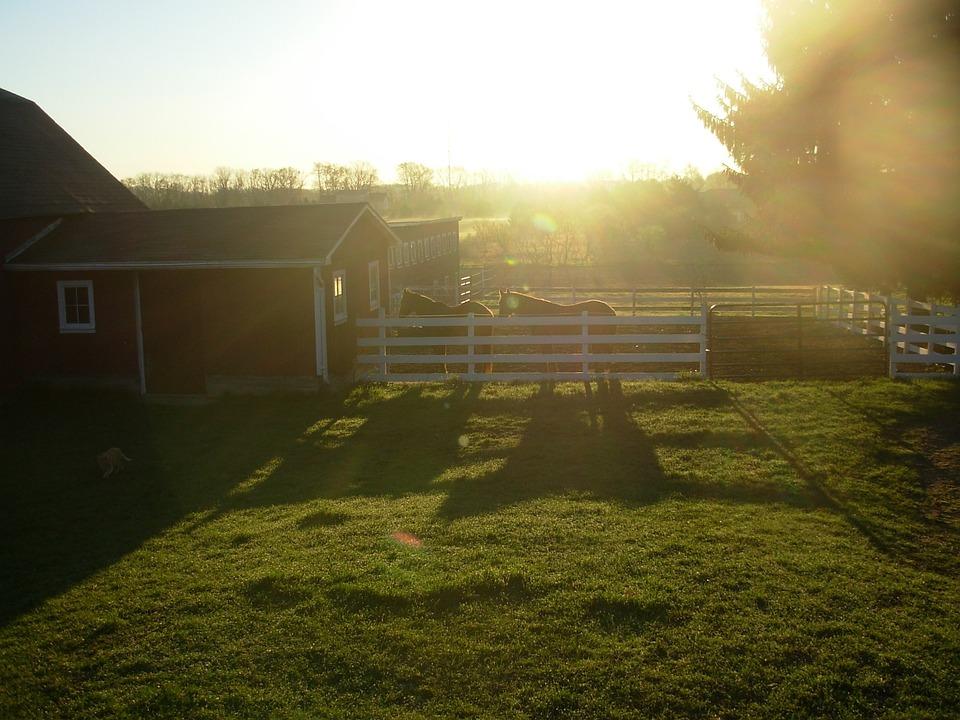 Horse, Farm, Barn, Equine, Equestrian