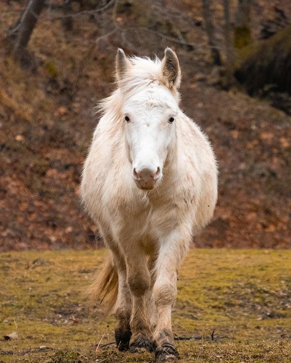 Horse, Nature, Animal, Animals, Horses, Equine, Pasture