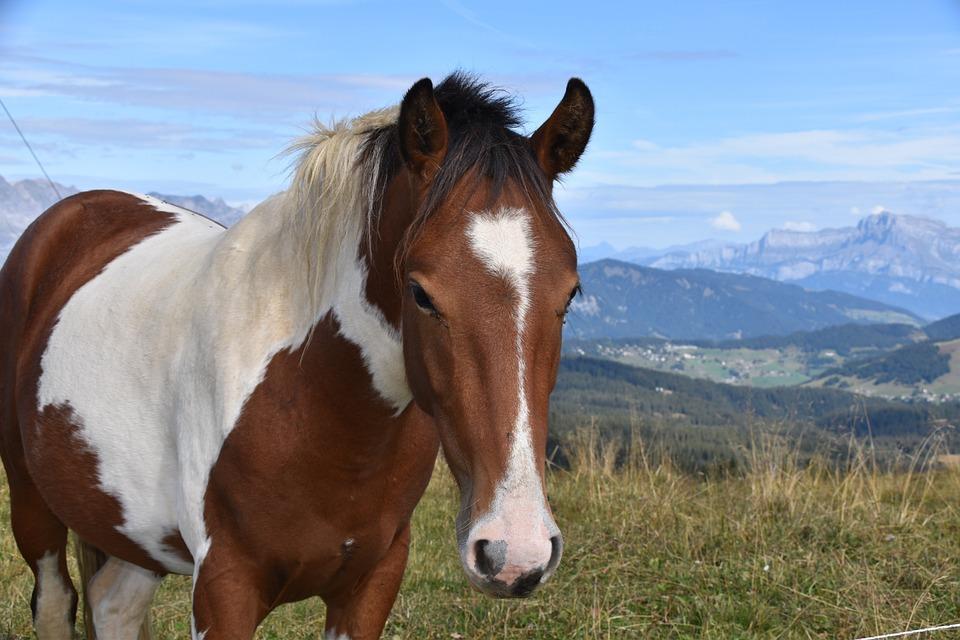 Horse, Animal Portrait, Equines, Horse Riding Equine