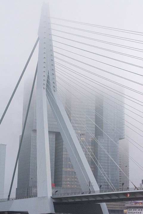 Fog, Bridge, Rotterdam, Erasmus Bridge, Swan