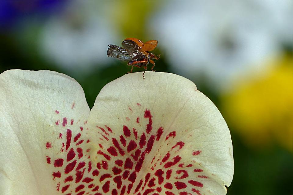 Plant, Blossom, Bloom, Rhododendron, Ericaceae, Insect