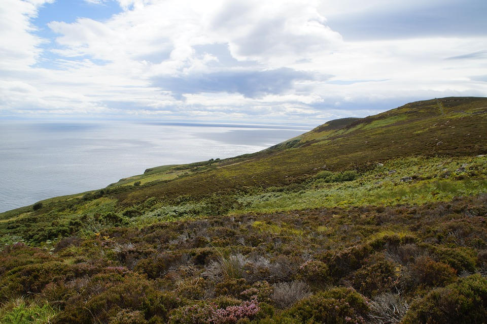 Scotland, Heide, Coast, Landscape, Erika, Heather