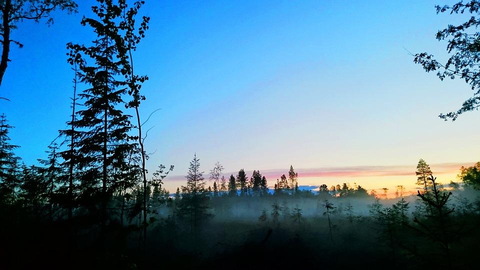 Nature, Mist, Forest, Tree, Atmosphere, Essential, Fog