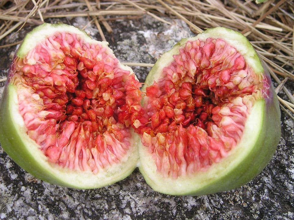 Euro Dynasty, Ficus, Fig, Ficus Carica, Fruit, Sweet