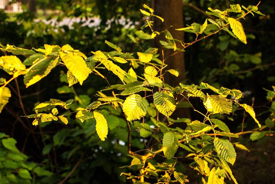 Foliage, Autumn, Evening, Autumn Gold, Yellow Leaves