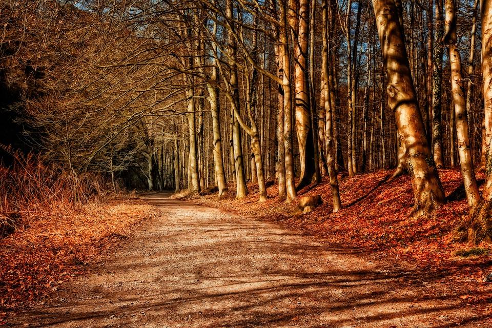 Forest, Away, Sunset, Evening, Nature, Abendstimmung