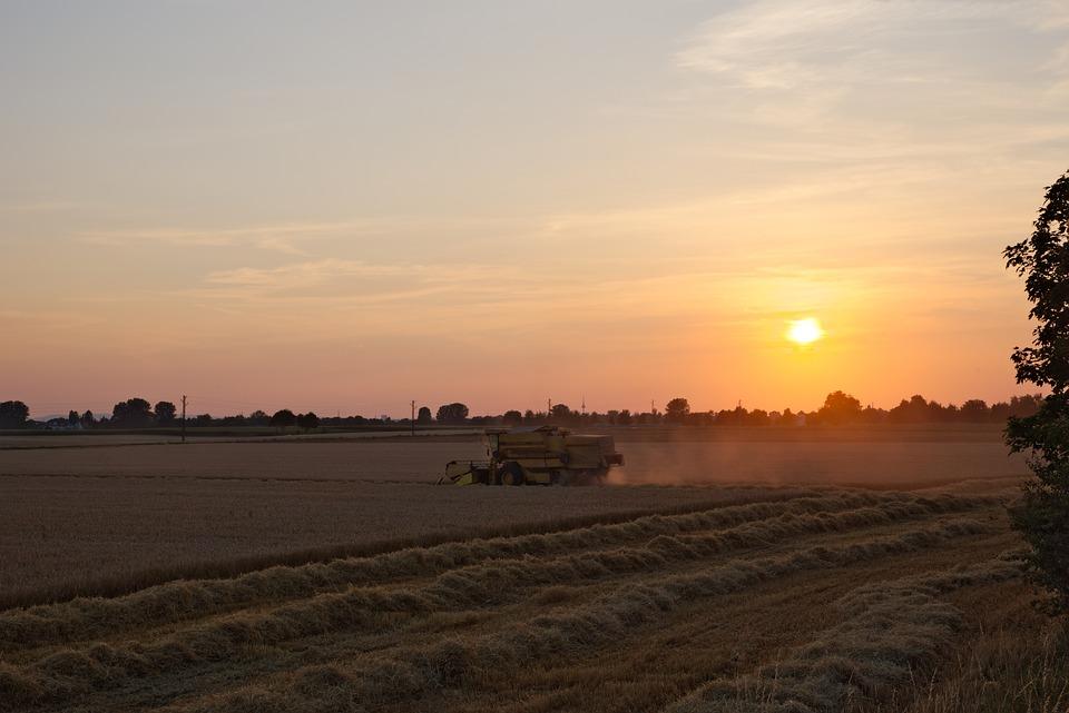 Combine Harvester, Evening, Sunset, Field, Agriculture