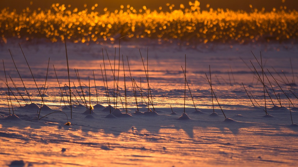 Finland, Winter, Snow, Ice, Reeds, Lake, Evening