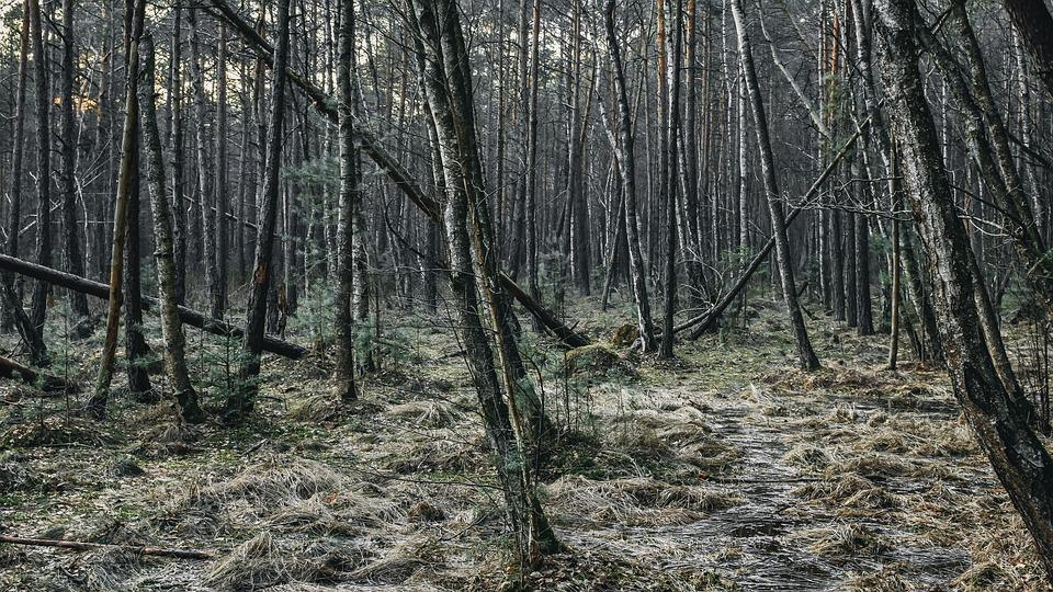 Forest, Jungle, Wood, Evening, Fantasy, Mysterious