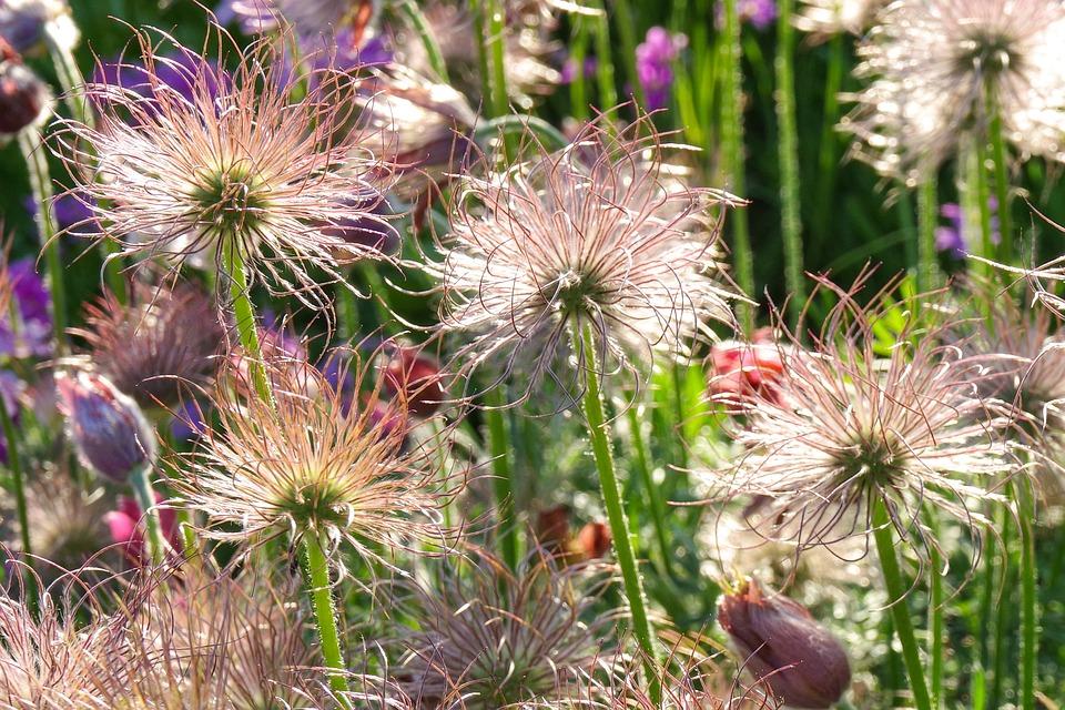 Flower, Keto, Evening, Sunset, Garden, Summer