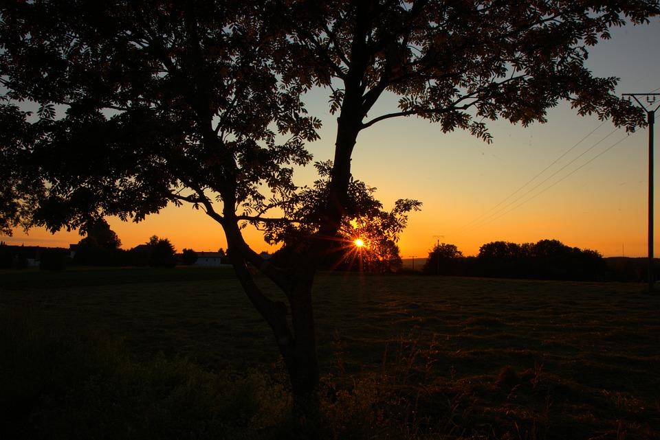 Sunset, Trees, Twilight, Evening, Light, Romantic, Mood
