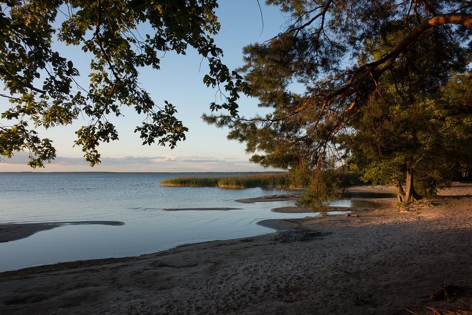 Lakeside, Evening Light, Müritz, Bank, Landscape, Trees