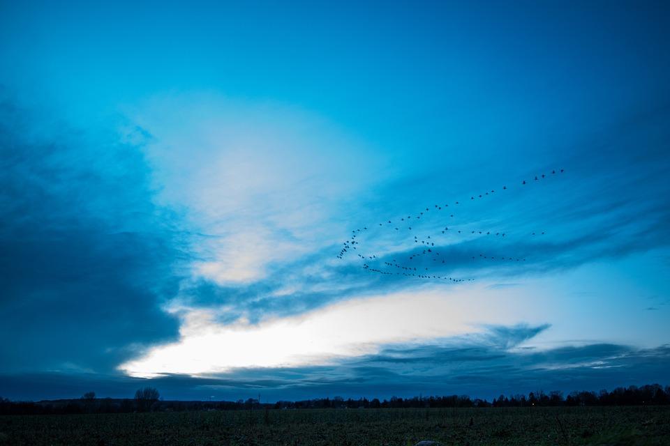 Evening, Blue, Sky, Migratory Birds, Blue Hour