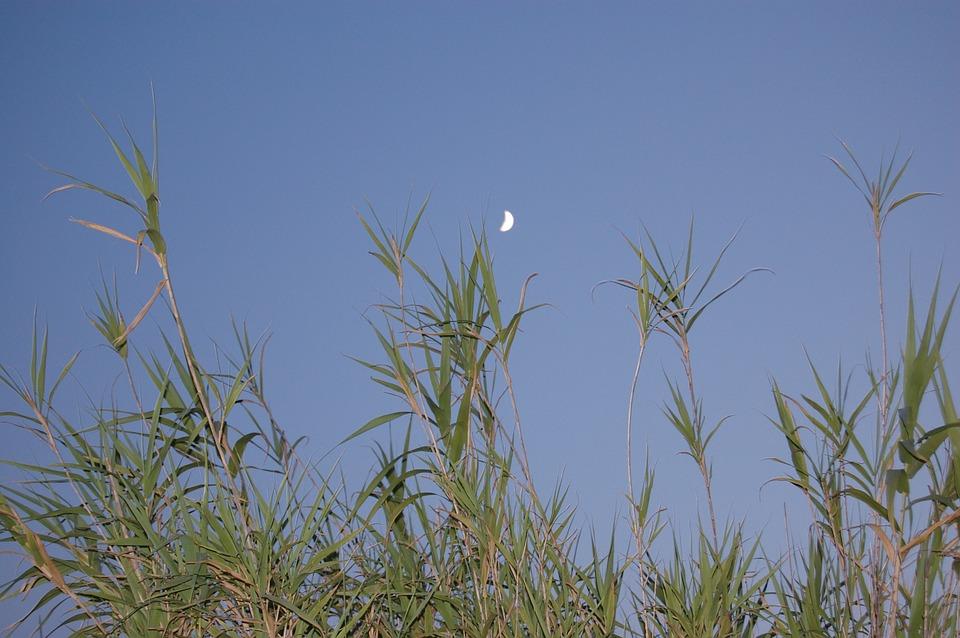 Evening, Moon, Atmosphere