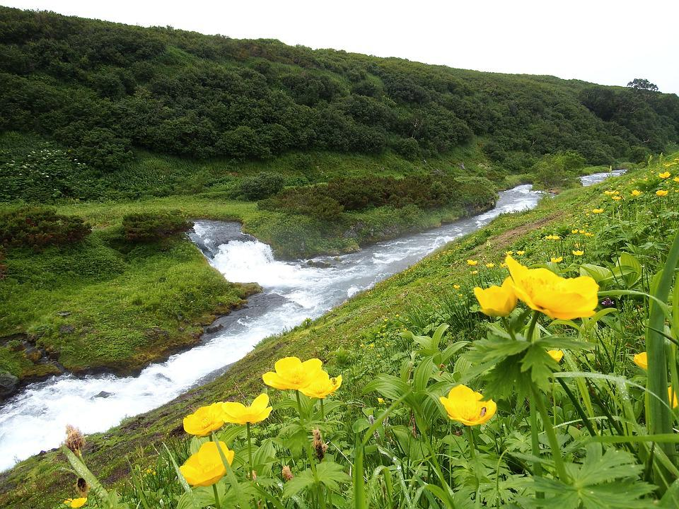 Creek, Mountain Plateau, Flowers, Kupaonici, Evening