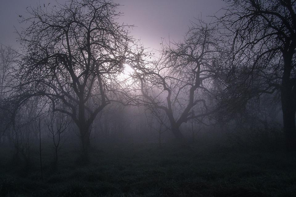 Tree, Dark, Mood, Evening, Haze, Horror Movie, Mystery