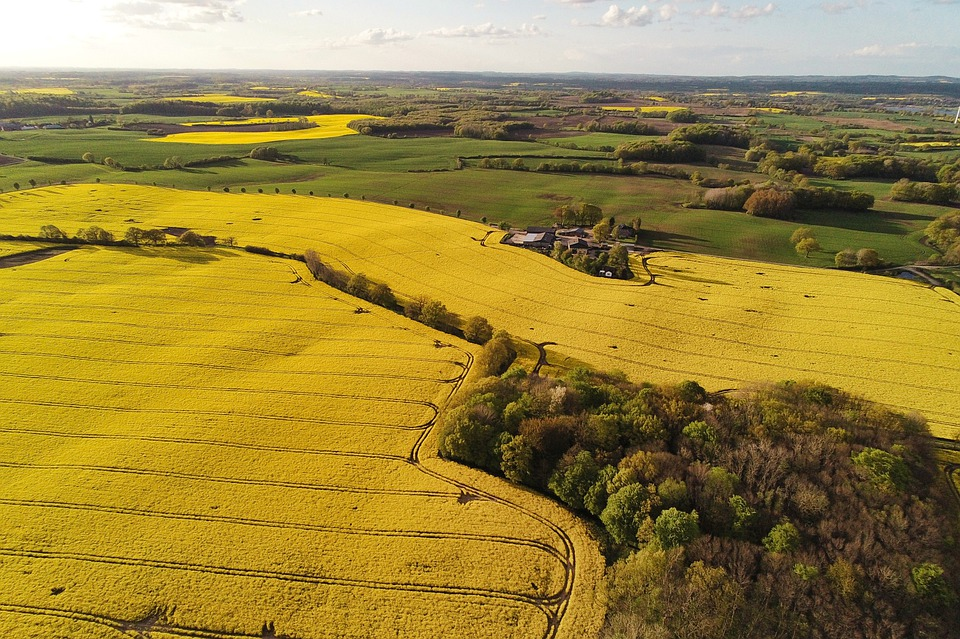 Oilseed Rape, Fields, Drone, Aerial View, Evening