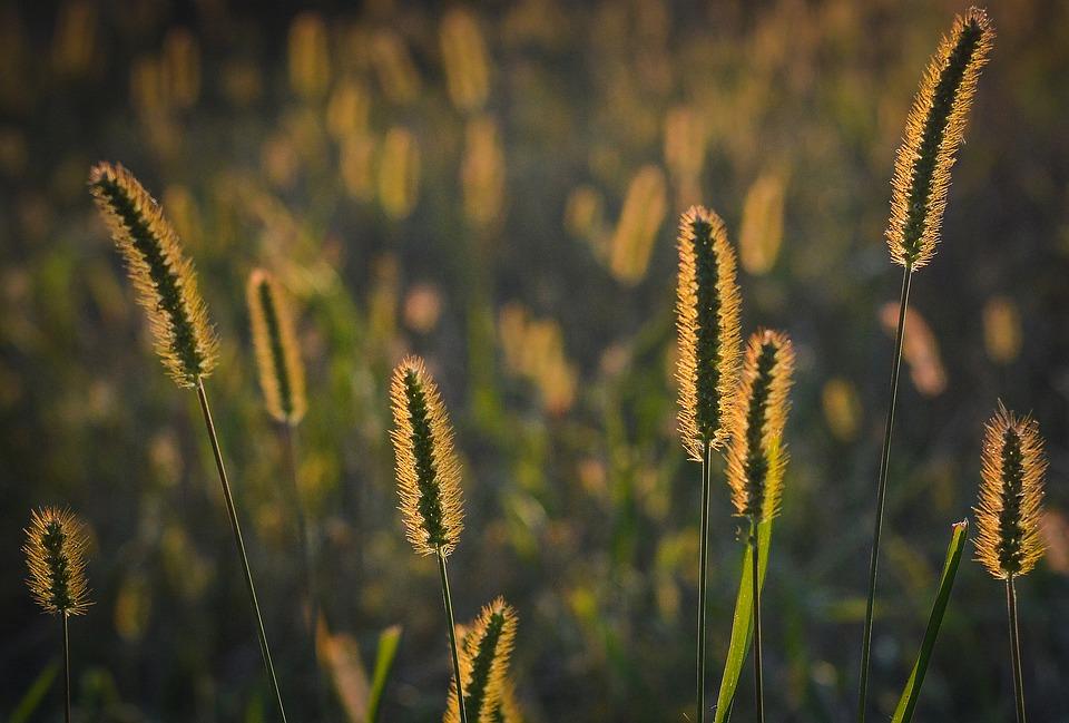 Grass, Sunset, Nature, Evening, Meadow, Scenery, Summer