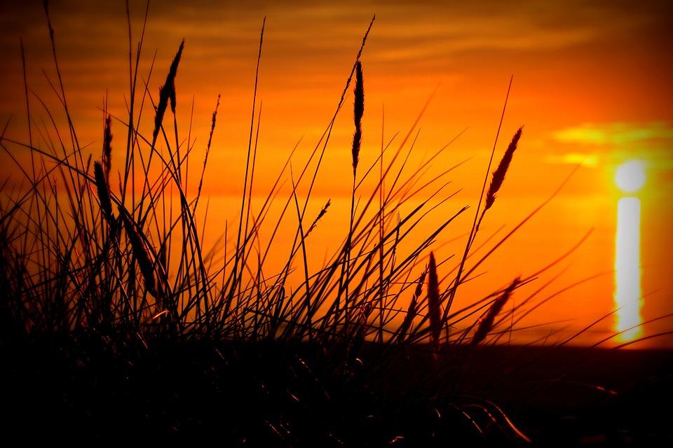 Sunset, Evening Sun, Grasses, Evening Sky, Nature