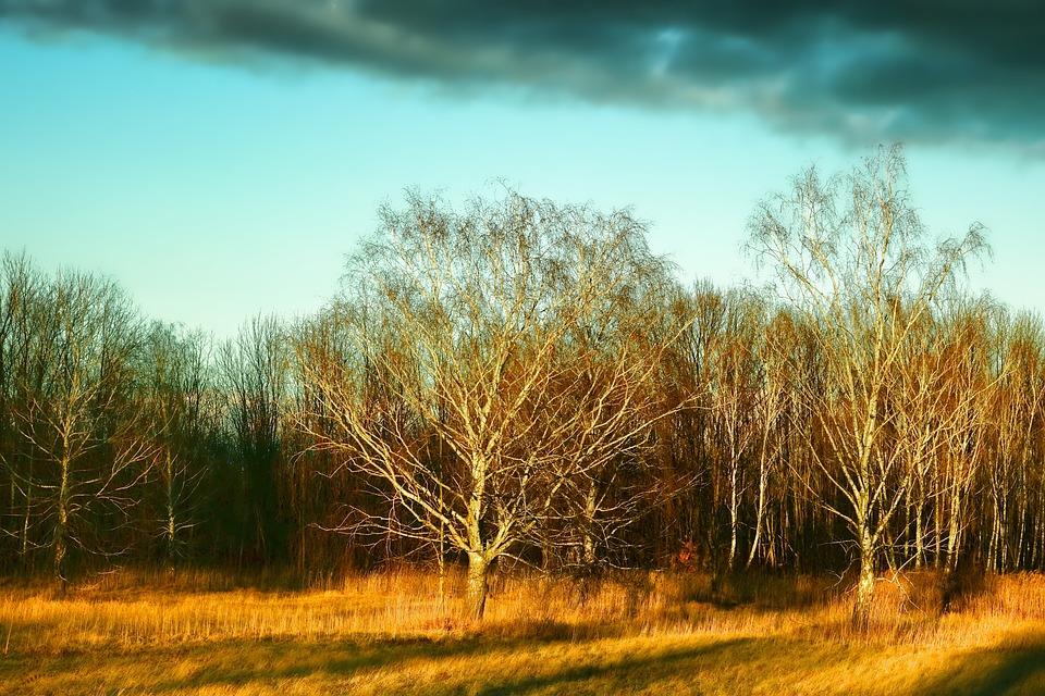 Tree, Landscape, Nature, Afterglow, Sunset, Evening Sky