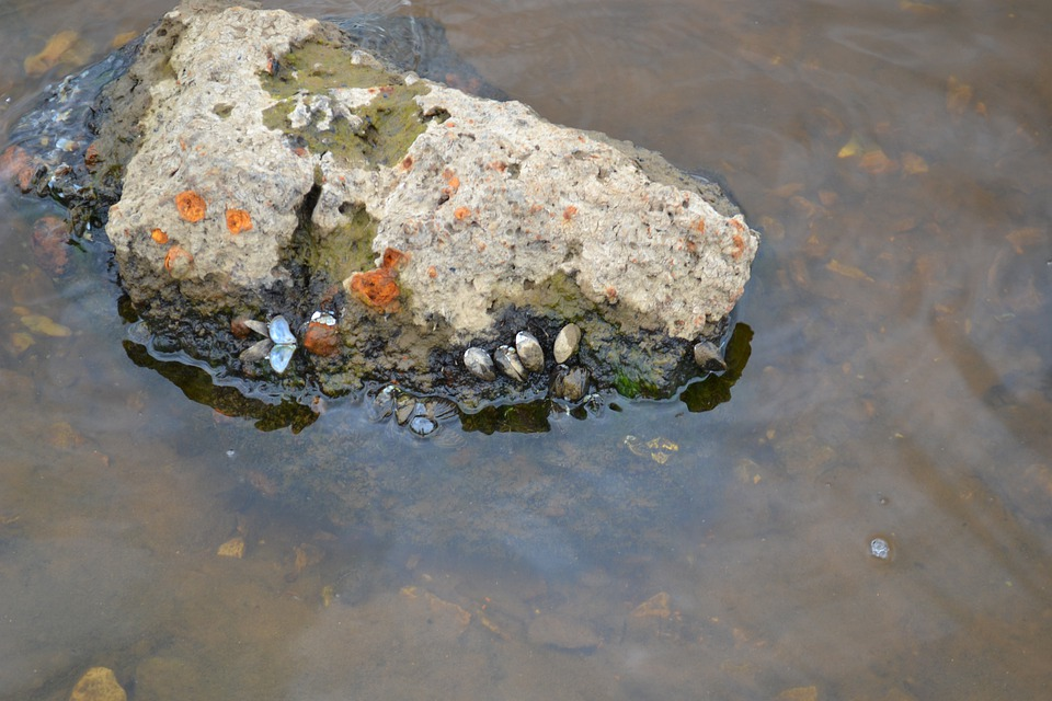 Stone, Seashells, Water, Transparency, Summer, Evening