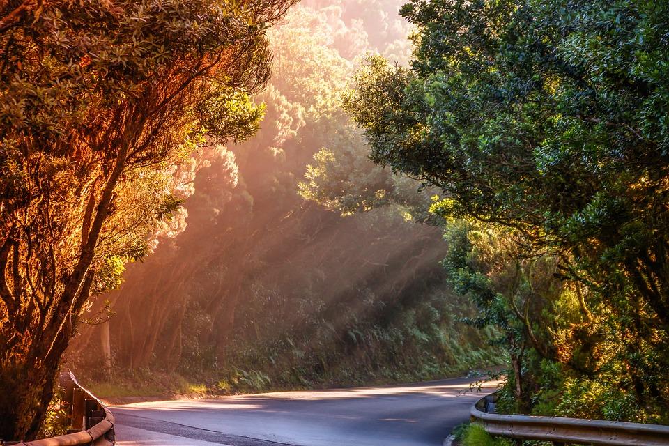 Nature, Landscape, Road, Sunbeam, Evening Sun