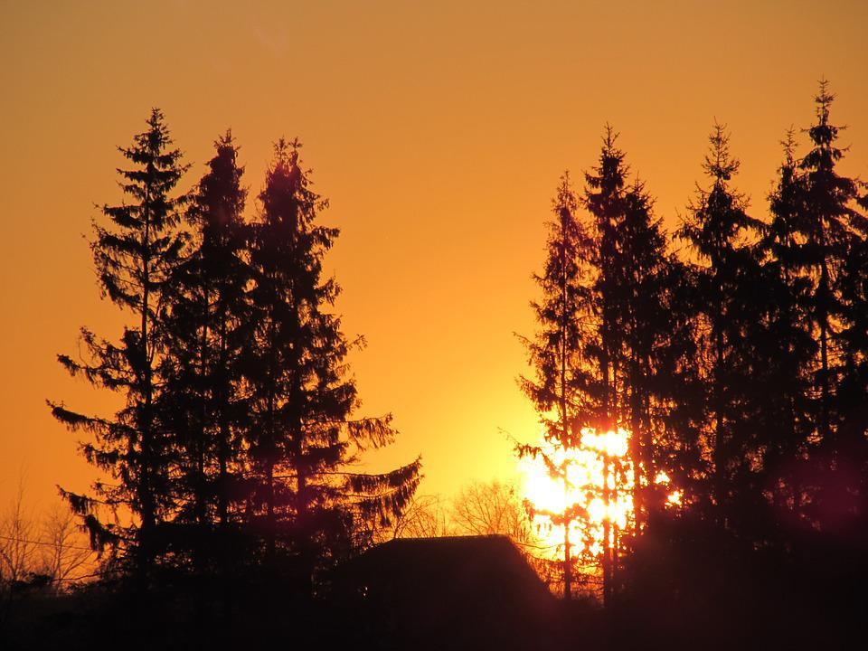 Sunset, Trees, Fir, Silhouette, Nature, Sun, Evening