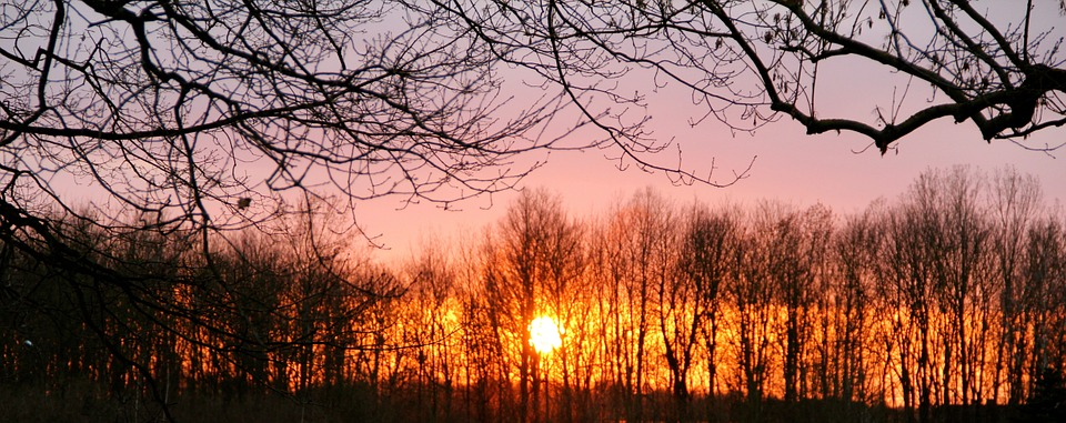 Sunset, Trees, Winter, Mood, Kahl, Evening, Twilight