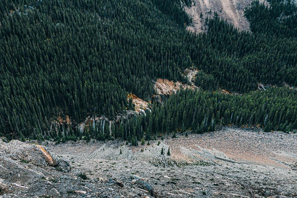 Conifer, Daylight, Environment, Evergreen