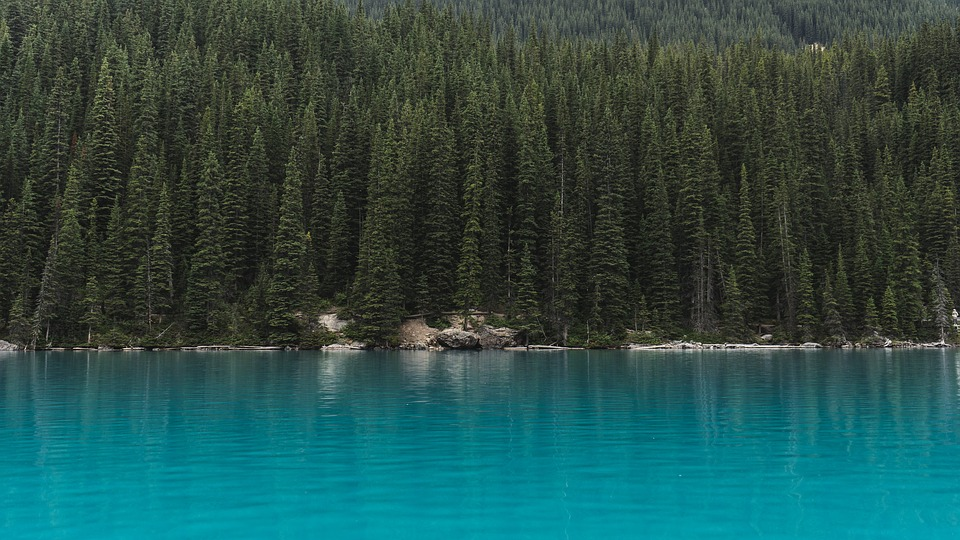 Conifer, Evergreen, Forest, Green, Idyllic, Lake