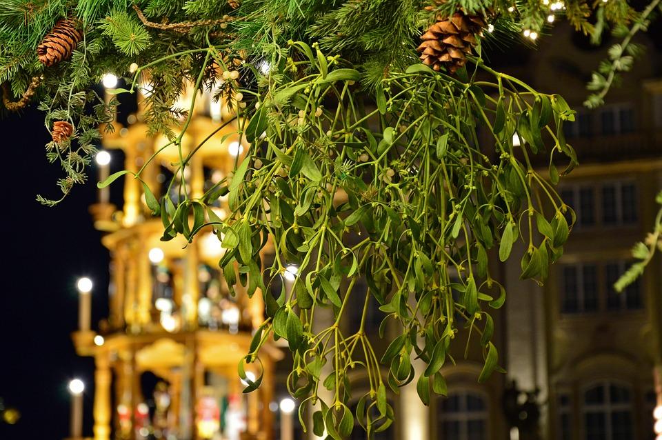 Mistletoe, Plant, Evergreen, Medicinal Plant