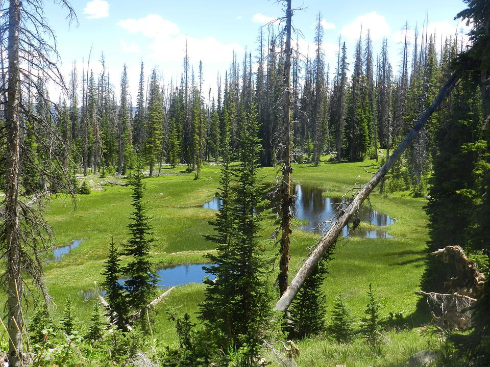 Uinta, Swamp, Mountains, Utah, Forest, Evergreen