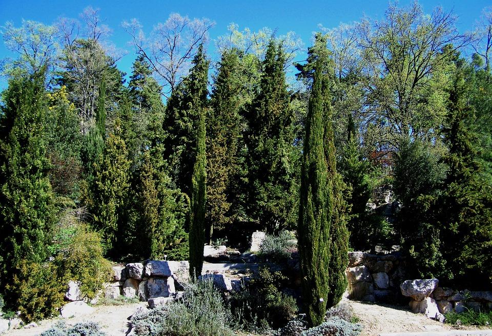 Evergreens, Rocks, Pecs, Botanical Garden
