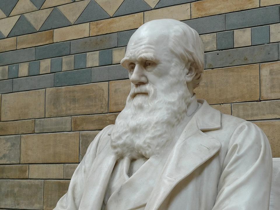 Darwin, Natural History, Museum, Evolution, Natural
