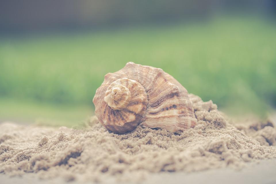 Shell, Nature, Sand, Exoskeleton, Summer